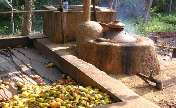 Фени – индийская водка 1